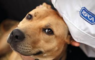 Adopt Dogs