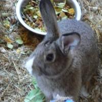 Baby Rabbits*