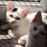 Sparkles Kittens